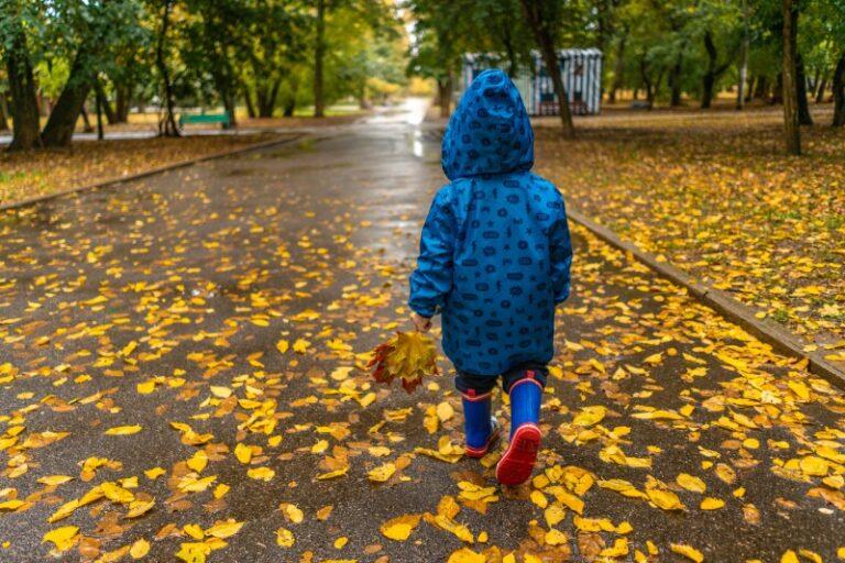 after the rain autumn autumn leaves 3036397